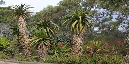 West Perth, Perth, Western Australia, Australia