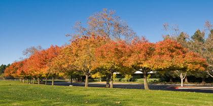 Sunnyvale, San José - Silicon Valley, California, Estados Unidos