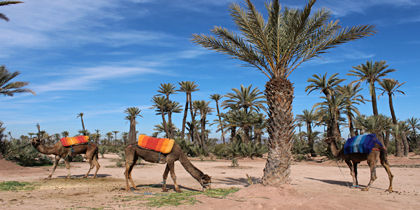Palm Groves, Marrakech, Morocco