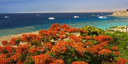 Ras Umm Sid, Sharm el Sheikh, Egypt
