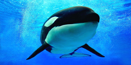 SeaWorld San Antonio, San Antonio, Texas, United States of America