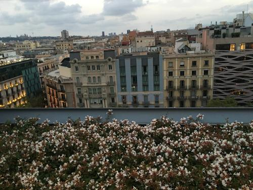 Hotel royal passeig de gracia in barcelona for Hotel gracia barcelona